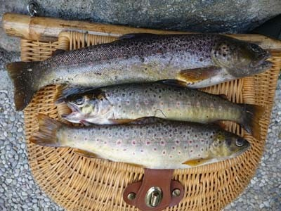 Photo of Trout Caught by Nicolas with Mepps Aglia & Dressed Aglia in France