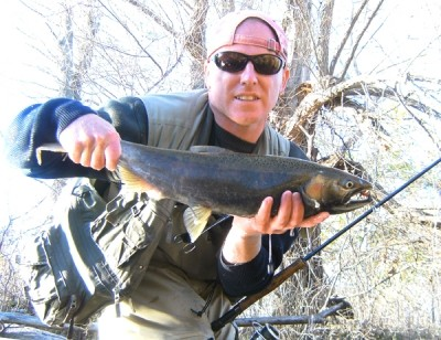 Photo of Ted's 10/31/10 Salmon, Coho (silver)