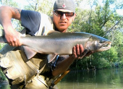 Photo of Ted's 9/20/11 Salmon, Coho (silver)