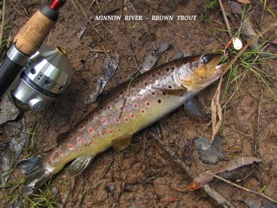 Photo of Trout Caught by Adrian with Mepps Aglia Ultra Lites in United States - Mepps