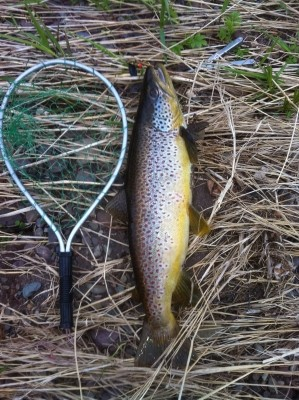 Photo of Trout Caught by Earl with Mepps Black Fury in Nova Scotia