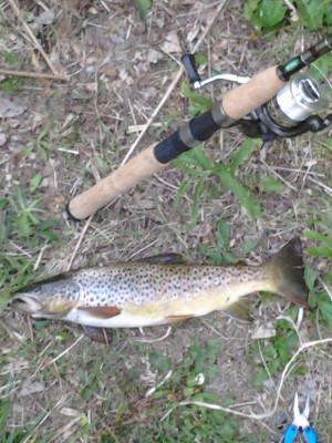 Photo of Trout Caught by Eddie with Mepps Aglia & Dressed Aglia in Michigan