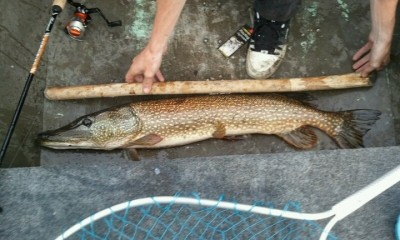 Photo of Pike Caught by Andrew with Mepps Aglia & Dressed Aglia in Wisconsin