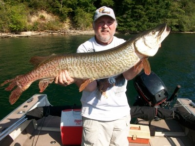 Photo of Tiger Musky Caught by Kim with Mepps  in Washington