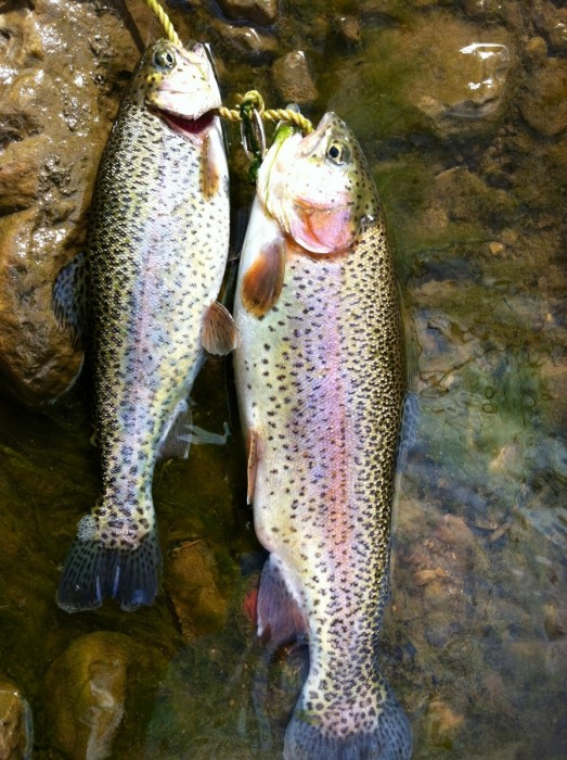 Photo of Trout Caught by Richard with Mepps Aglia & Dressed Aglia in Virginia