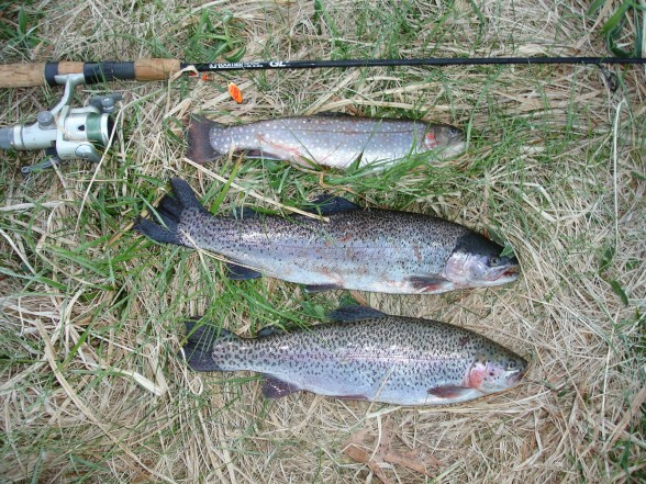 Photo of Trout Caught by Dan with Mepps Aglia Long in Connecticut