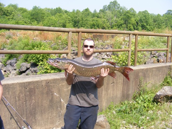 Photo of Musky Caught by John with Mepps Musky Killer in Ohio