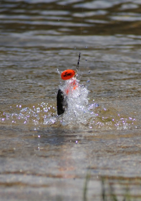 Photo of Trout Caught by Yvette  with Mepps Flying C in Idaho