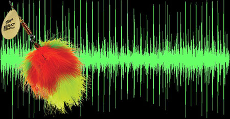 Waveforms of the sounds produced by the Musky Marabou